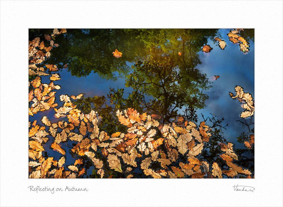 Reflecting on Autumn