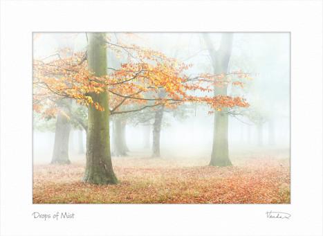 Drops of Mist