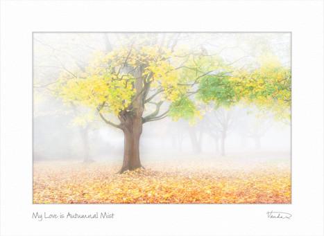 My Love is Autumnal Mist