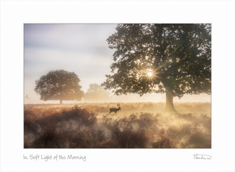 In Soft Light of the Morning